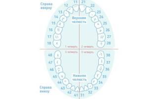 36 зубов у человека