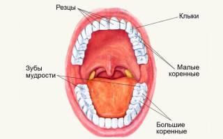 Сколько раз растут зубы у человека