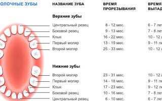 Сколько в норме зубов у человека