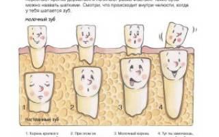 Нервы в молочных зубах