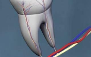 Зачем в зубах нужны нервы