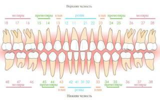 Расположение зубов по номерам
