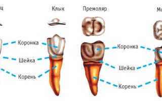Удаление гнилого корня зуба